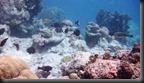 20170716 Bitlik Underwater (10)